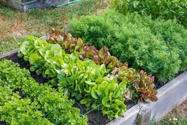 How To Start A Garden | Starting A Garden | Backyard Gard