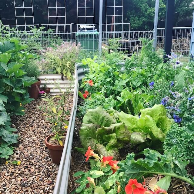 How to Start a Garden in Your Backyard: 7 Effective Wa