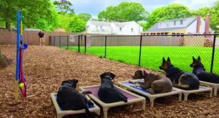 60+ Super Ideas For Backyard Playground Dog | Dog playground, Dog .