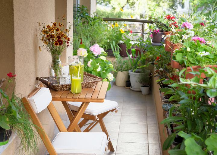 Starting a Terrace Garden or Balcony Garden] | Old Farmer's Alman