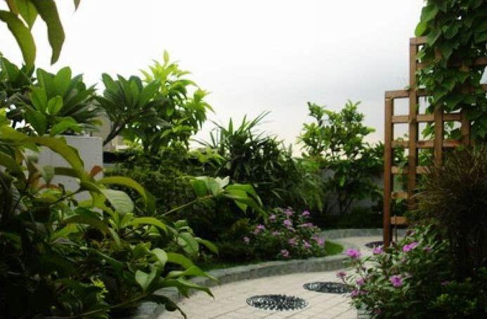 Best Terrace/Roof Garden Plants You should Grow - lenny - Garden .