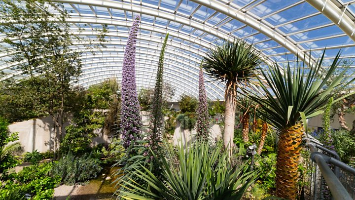 National Botanic Gardens of Wales is blooming at 20 - BBC Ne