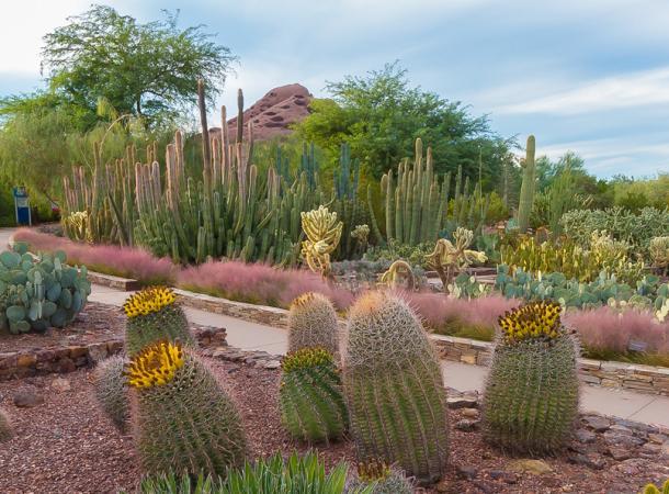Desert Botanical Gard