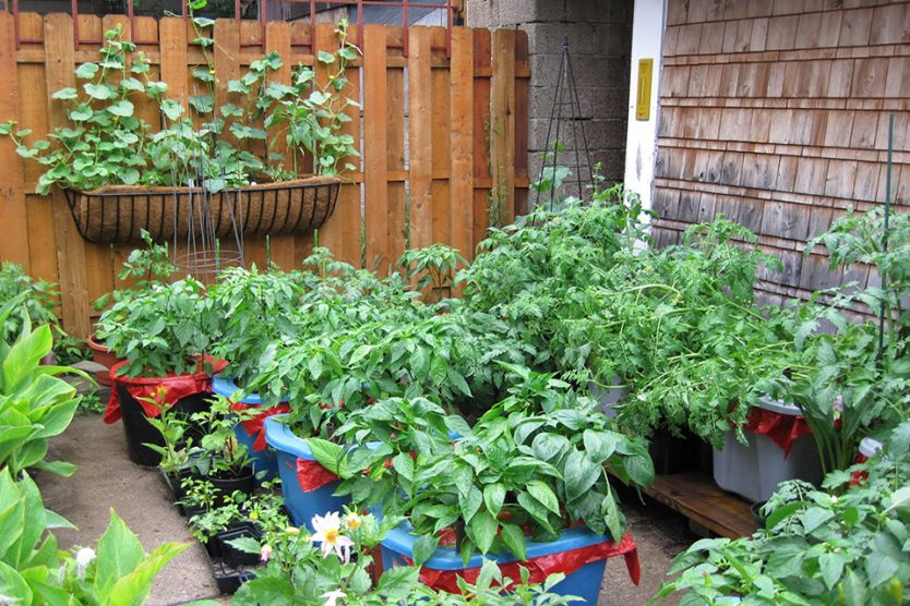 SELECTING THE BEST VEGETABLES FOR YOUR CONTAINER GARDEN - Plant .