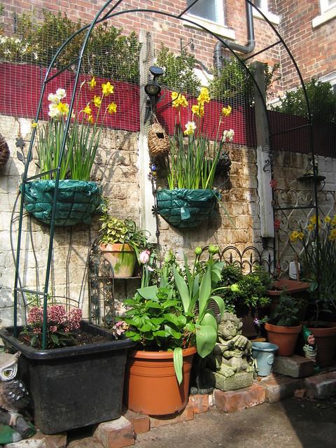 Container Gardening, Part I | Piedmont Master Gardene