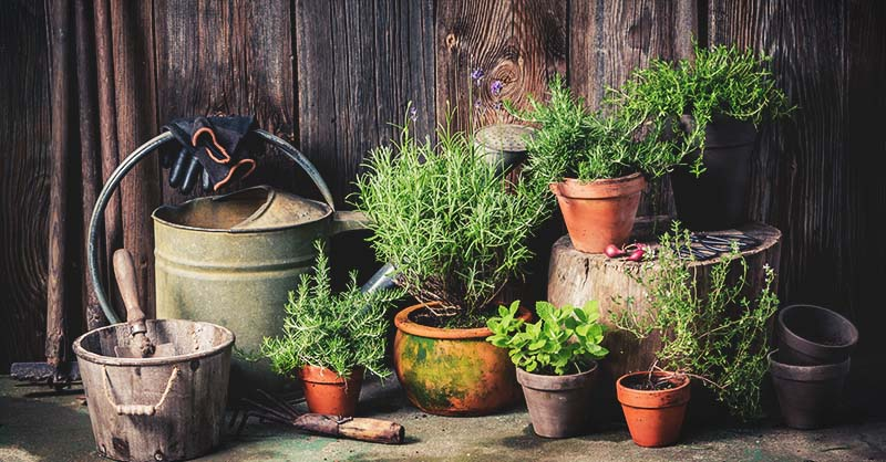 A Complete Guide to Vegetable Container Gardening for Beginne