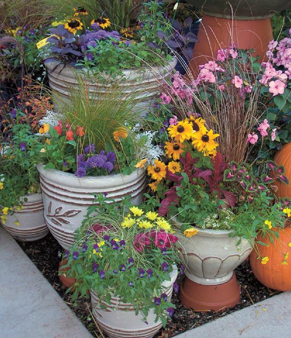Container gardening – San Diego Downtown Ne