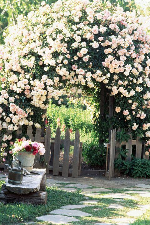 9 Cottage Style Garden Ideas - Gardening Ide