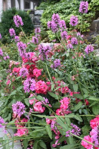 Cottage Garden Design Ideas | Garden Desi