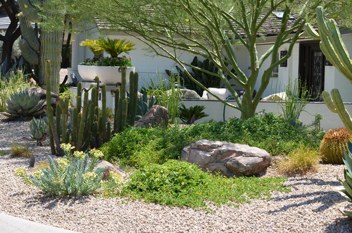Creating a Lush Desert Oasis in the Urban Landscape | Desert .