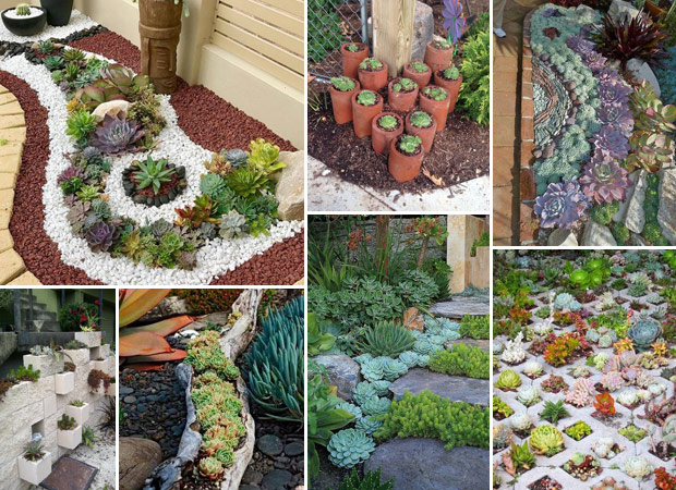 20 Ideas for Creating Amazing Garden Succulent Landscapes - Proud .