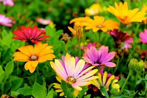1000+ Amazing Flower Garden Photos · Pexels · Free Stock Phot