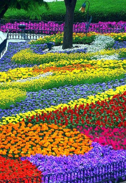 Rainbow garden .... .SOUTH KOREA ... ©In Cherl Kim (floridapfe .