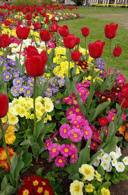 6 Tips for a Better Spring Flower Garden | Spring garden flowers .