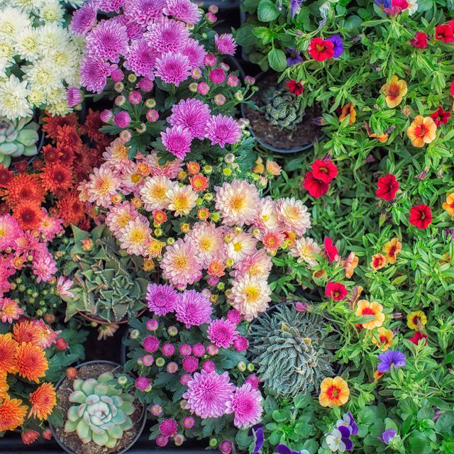 30 Best Fall Flowers for an Autumn Garden - Prettiest Flowers to .