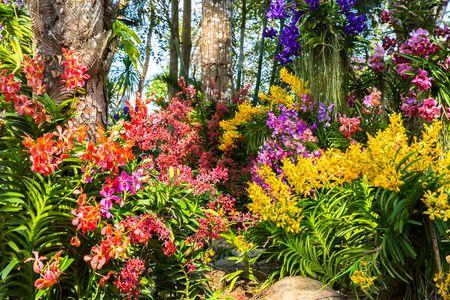 How to Grow an Amazing Flower Gard