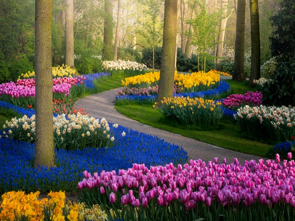 Photos of Keukenhof flower fields in the Netherlands without .