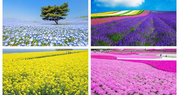 16 Must-See Flower Gardens Around Japan | tsunagu Jap