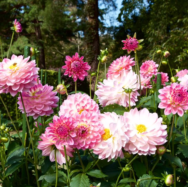 60 Best Types of Flowers – Pretty Pictures of Garden Flowe