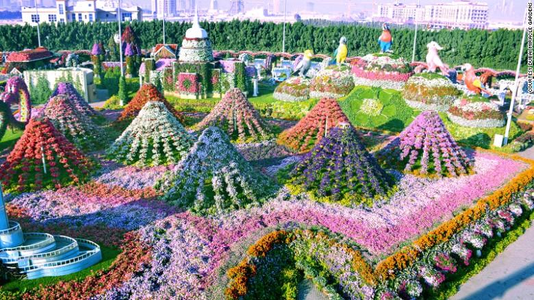 Dubai Miracle Garden: World's largest flower garden | CNN Trav