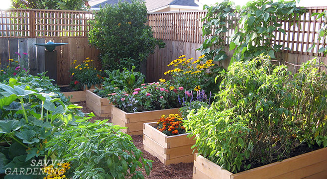 Planting a Raised Bed: Tips on spacing, sowing, and growi