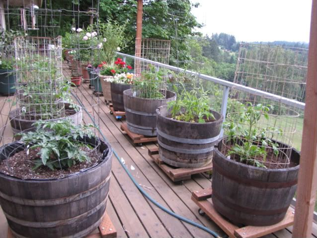 Go Beyond Borders and Grow Vegetables in Containers | Small .