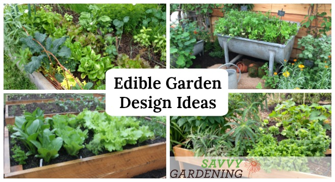 Edible Garden Design Ideas to Boost Production and Beautify your Spa