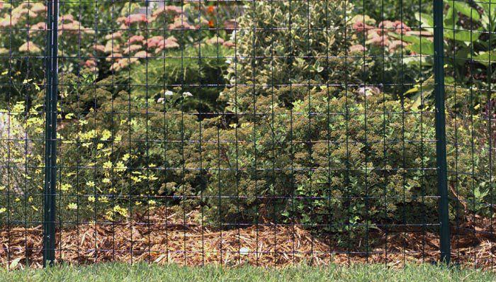 Garden Fence Ti