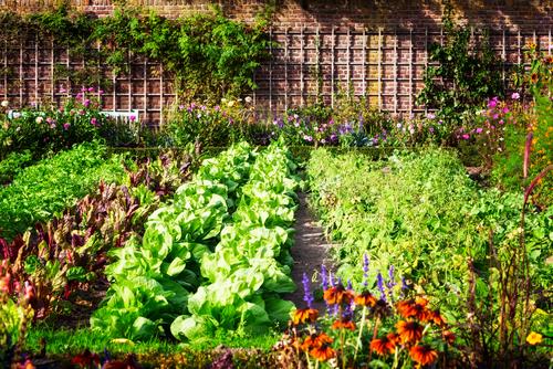 Landscaping Tips For A Vegetable Garden - Axe Tree Pr