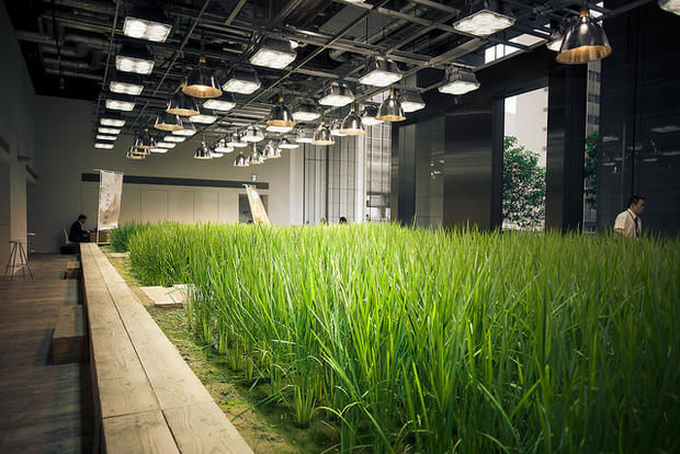 Eco Garden Offices : Sustainable Urban Gard
