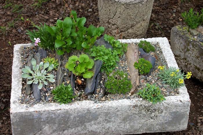 Slate Crevice Trough Garden | Wild Ginger Fa