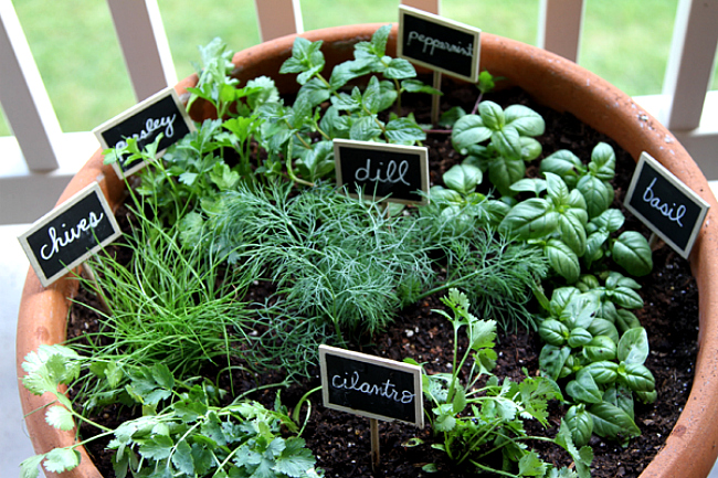 Delaware Center for Horticulture's Container Herb Garden Worksh