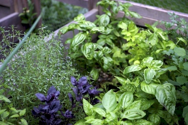 Everything You Need to Know About Herb Gardens - Gardenis