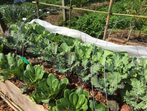 Home Gardening | University of Maryland Extensi