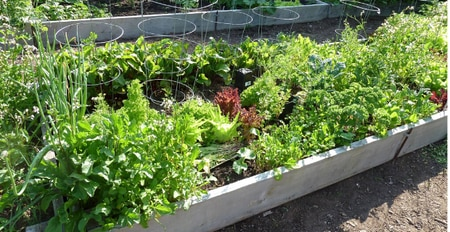 You've always wanted a garden. Here's how to make it happen (as .