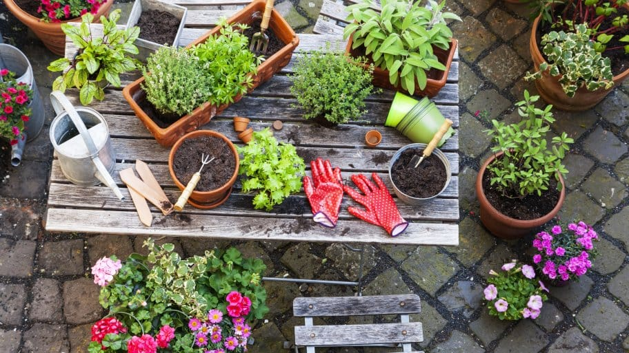 Beginning Home Gardening Guide | Angie's Li