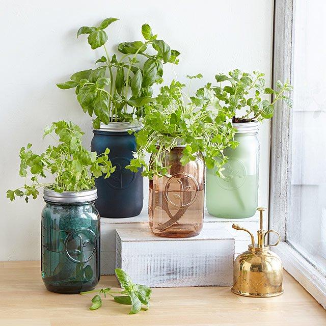 Mason Jar Indoor Herb Garden | Hydroponic Grow Kit | Uncommon Goo
