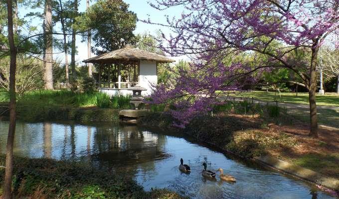 Japanese Garden | Hermann Park Conservan