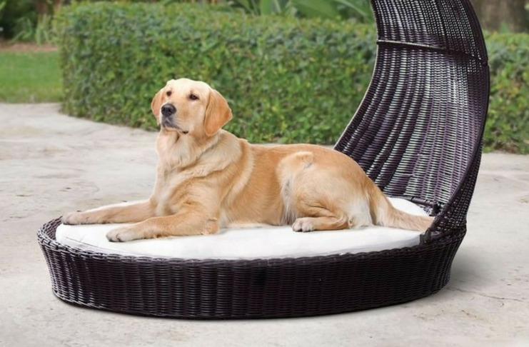 Facts About Outdoor Dog Bed For Large Do