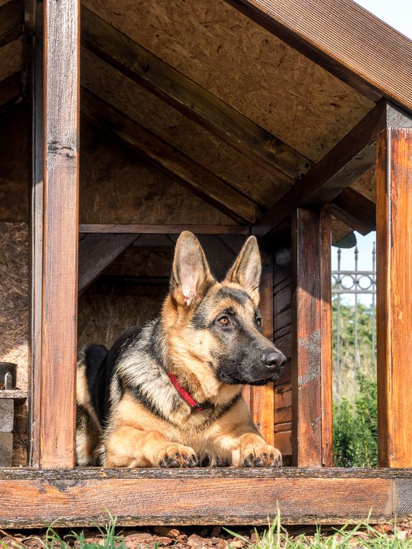 Dog Owners in New Jersey Beware-Outdoor Dog Shelters That Comply .