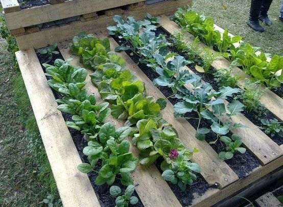 recycled pallet raised bed garden. That's really smart. Now I don .