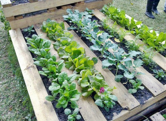 How to Make a Wood Pallet Garden - New England Tod