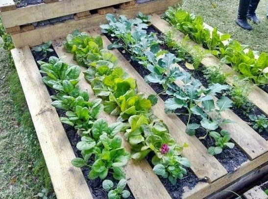 For raised garden purposes, a pallet can be laid flat on the .