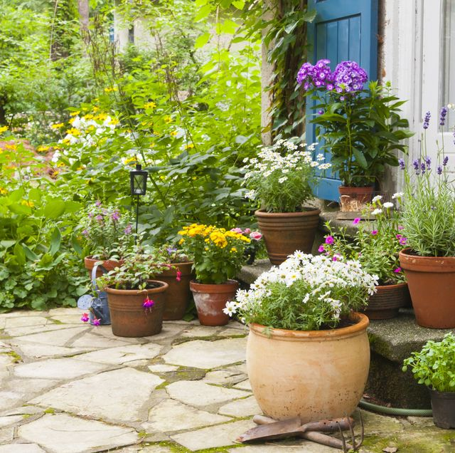 15 Best Patio Plants - Outdoor Patio Plants Ide