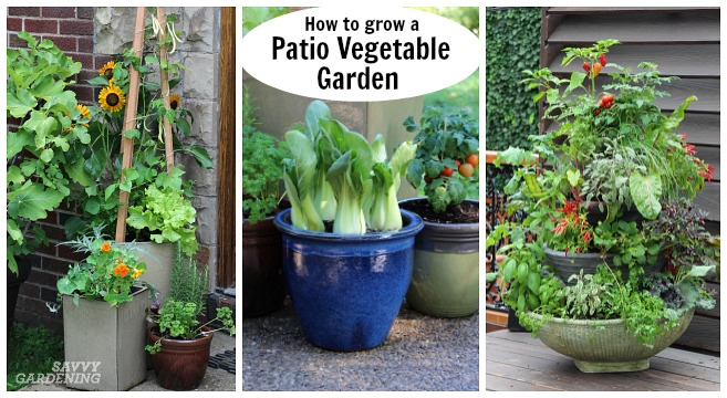 Patio Vegetable Garden Setup and Tips to Get Growi