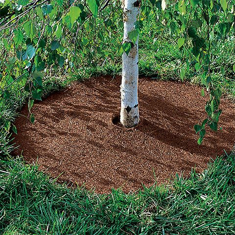Coco Fiber Mulch Tree Rings | Gardener's Supply in 2020 | Plastic .