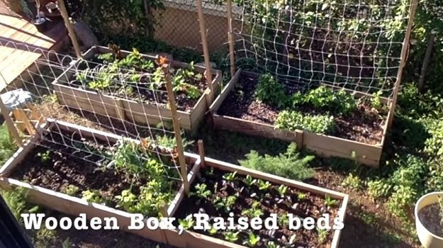 Video] Container Gardening Vs. Raised Bed Gardening - Sustainable .