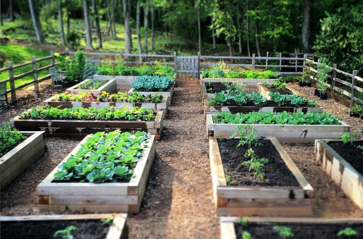 joe gardener® | Organic Gardening Like a P