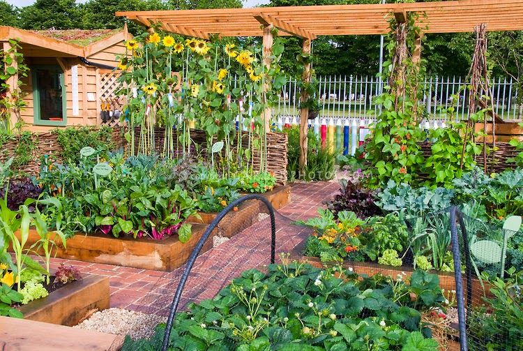 dream vegetable garden - Google Search | Home vegetable garden .