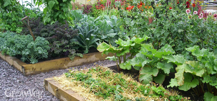 5 Tips for Planning Your Vegetable Gard